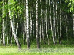 http://www.pilim-kromim.ru/foto_pechat/min_pechat_12.jpg